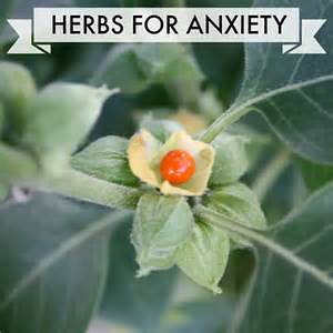 Herbs that heal anxiety